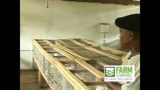 Rabbit Farming in Ghana: The Farmer Brown Story (Part 1)
