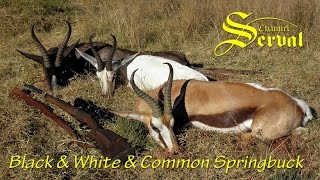 Black & White & Common Springbuck - Best hunting in South Africa