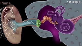 Human ear - structure & working | Sound | Physics | Khan Academy
