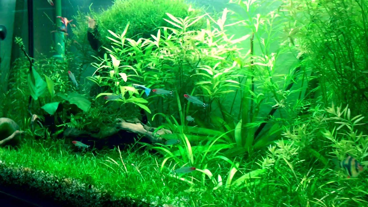aquarium plants produce oxygen wasserpflanzen sauerstoff assimilation teil2 youtube. Black Bedroom Furniture Sets. Home Design Ideas