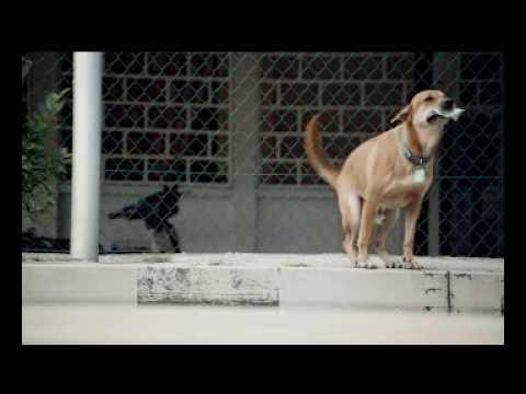 Duke's Film Debut: The SPCA Commercial