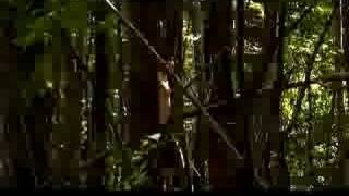 Twelve Tribes - Muzzle Order