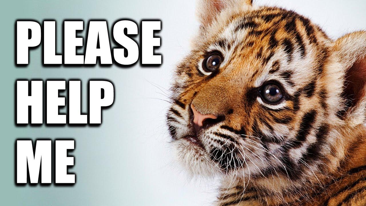 Big Cat Rescue Youtube