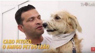 Video TV Leão - Amigos do Leão - Cabo Pitoco, o Amigo Pet do Leão download MP3, 3GP, MP4, WEBM, AVI, FLV Agustus 2018