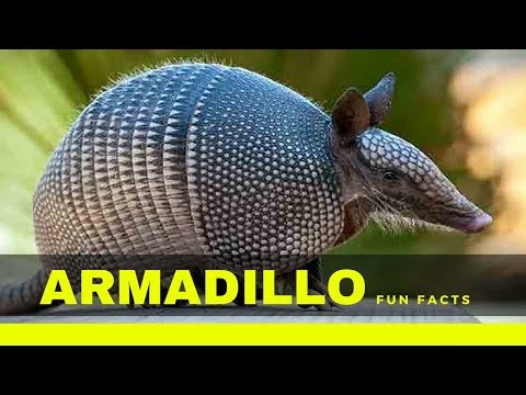 Armadillo Facts For Kids - Interesting Fun Facts You Should Know