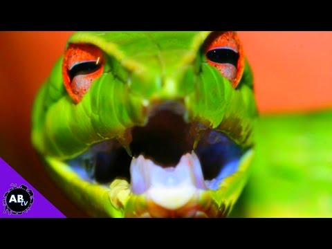 Weird Animals I Live With! 5 Weird Animal Facts : AnimalBytesTV