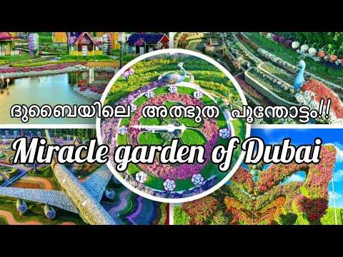 ദുബൈയിലെ അത്ഭുദ പൂന്തോട്ടം /Dubai Miracle Garden/حديقة الزهور بدبي