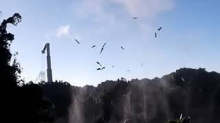 Iconic Arecibo telescope in Puerto Rico collapses before plans to demolish   ABC News