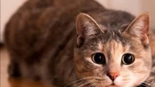 🐈 Красивые Кошки 🐈 видео и фото 🐈 Всем любителям кошек 🐱