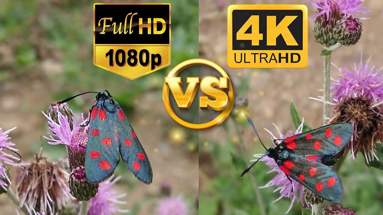Full HD 1080p vs. 4K Ultra HD - Sample Test Video - Side by Side Comparison - Karşılaştırma - YouTube