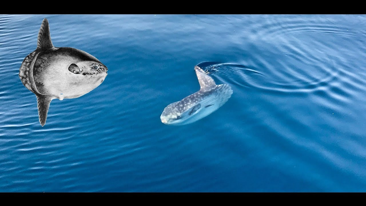 poisson n le site de rencontre de la mer radio-isotopes de datation radioactive