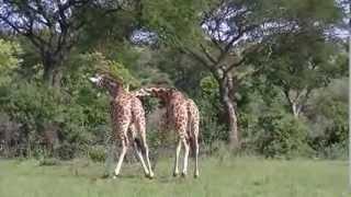 Ouganda - Partie 1