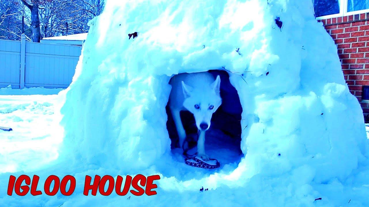 Husky Igloo Dog House