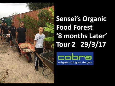 Sensei's Organic Food Forest - Perth Australia - Tour 2 - 8 Months Later - 290318