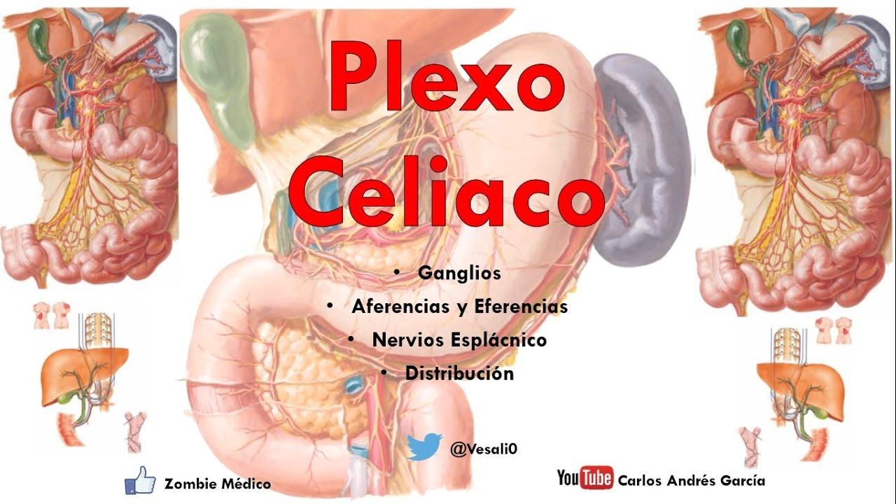 Anatomía Plexo Solar O Celiaco Ganglios Aferencias Ramos Youtube