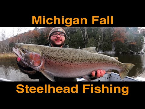 Michigan Fall Steelhead Fishing
