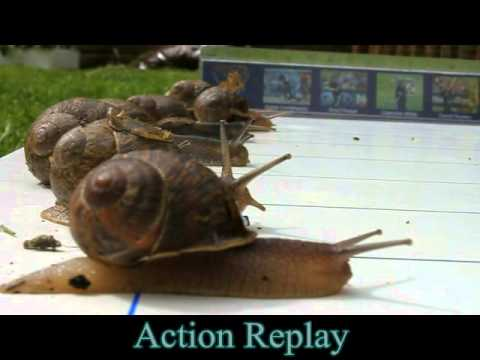 2012 Race Night - Race 2, The Snail Race