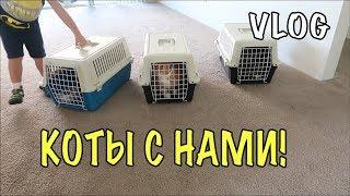 Второй переезд котов в США. Жизнь котов эмигрантов в Америке ВЛОГ 320 Жизнь в США