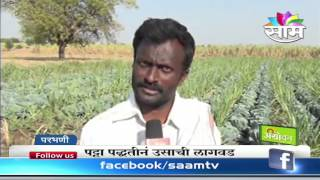 Satish Bandewar's Cabbage Intercrop Farming Success Story