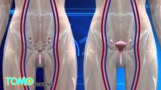 В США пройдут экспериментальные операции по трансплантации матки