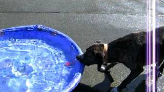 Waterplay - How Can I Get My Ball!
