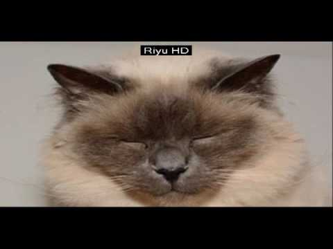funny cat videos for kids | Funny CATS guaranteed to make you laugh - Funny cat compilation