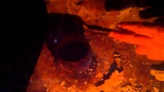 Tudor Pînzari îngheață în fum, la protest
