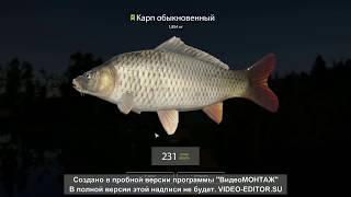 Русская рыбалка 4 . Ловим карпа и амура . Озеро старый острог .Точка 21-67