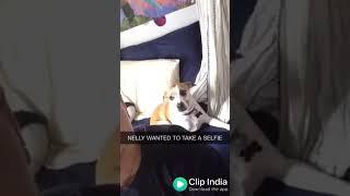 Altamash funny video