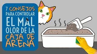 7 Consejos para Controlar el Mal Olor de la Caja de Arena de los Gatos