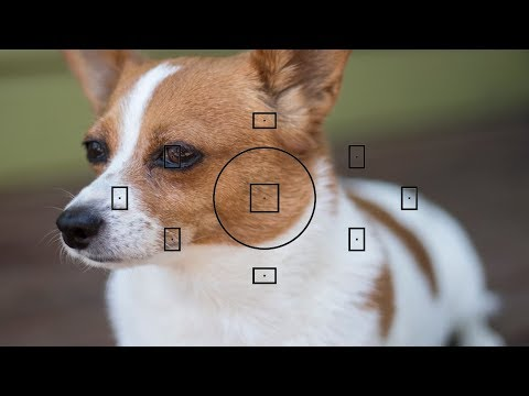 How to control the focus points on a Nikon & Canon DSLR.