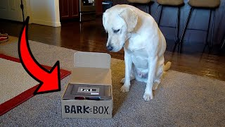 LABRADOR PUPPY REVIEWS BARK BOX!!