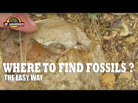 Where To Find Fossils ?  The Easy Way.