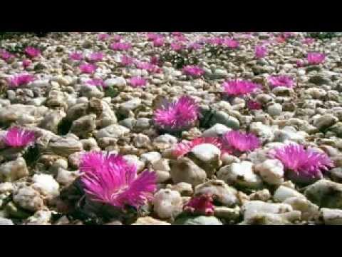 BBC Natural World Africas Desert Garden - Legendado pt