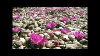BBC Natural World Africas Desert Garden - Legendado pt