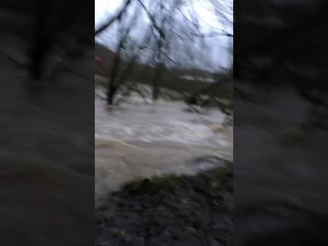 River Teviot in spate January 11 2020