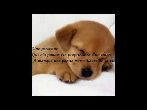 Super Citations perte animal - YouTube DI29
