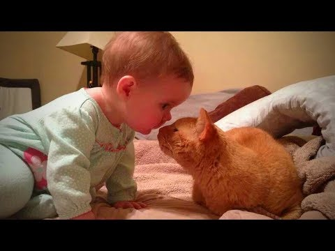 Cats and Babies 🐱👶 Cute Babies Playing with Cats (Full) [Epic Life]