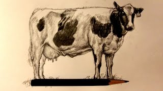 ASMR | Pencil Drawing 75 | Dairy Cow (Request)
