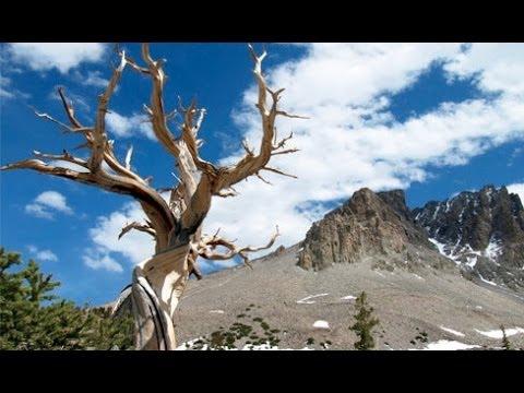 Solitude at Great Basin National Park