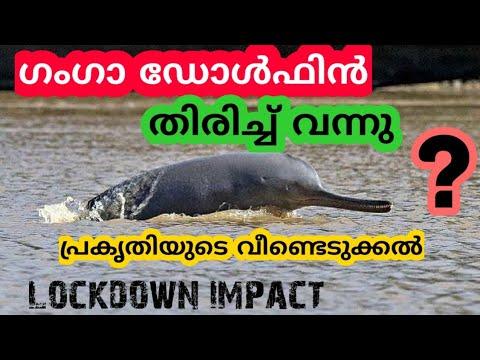 ഗംഗാ ഡോൾഫിൻ തിരികെയെത്തി survival of Ganges Dolphin    Make in Home II Lock down impact