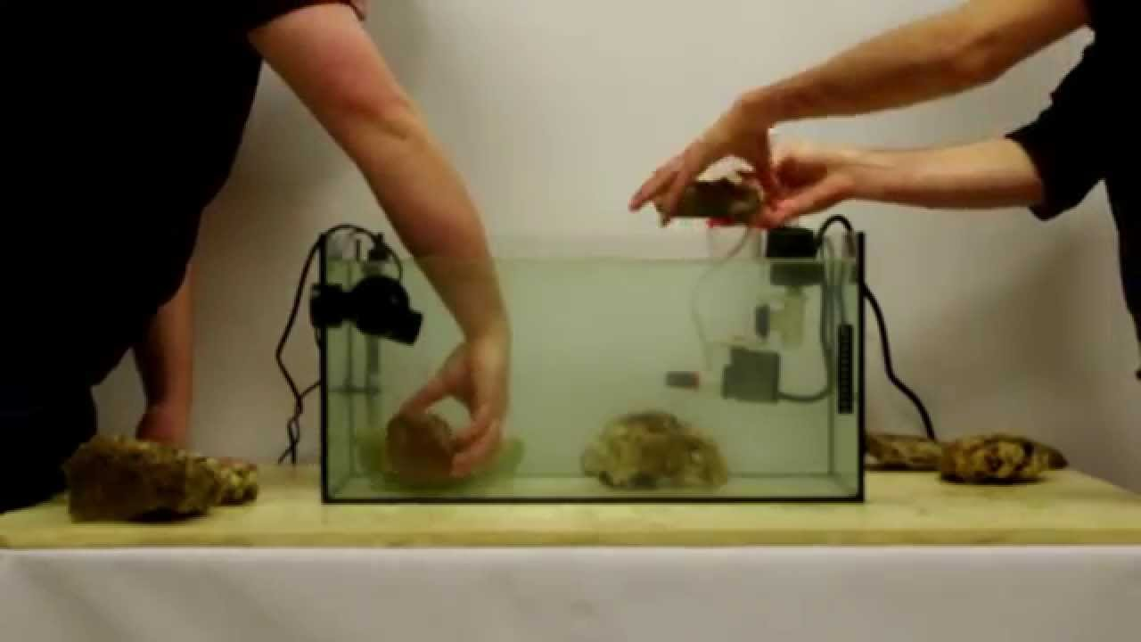 Aide l 39 installation d 39 un aquarium eau de mer kit vak for Achat aquarium eau de mer