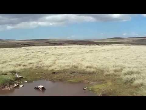 Falklands air war wreckage