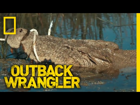Lurking in Clear Water | Outback Wrangler