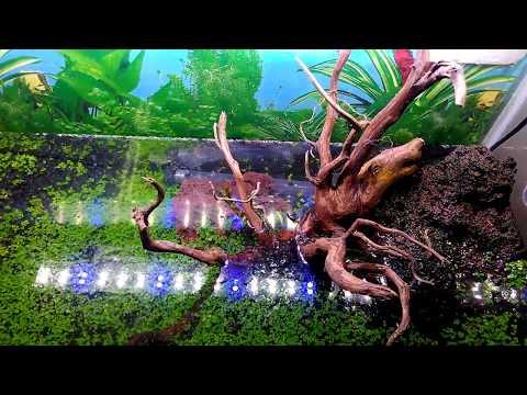 pengisian-air-&-ikan-di-aquascape