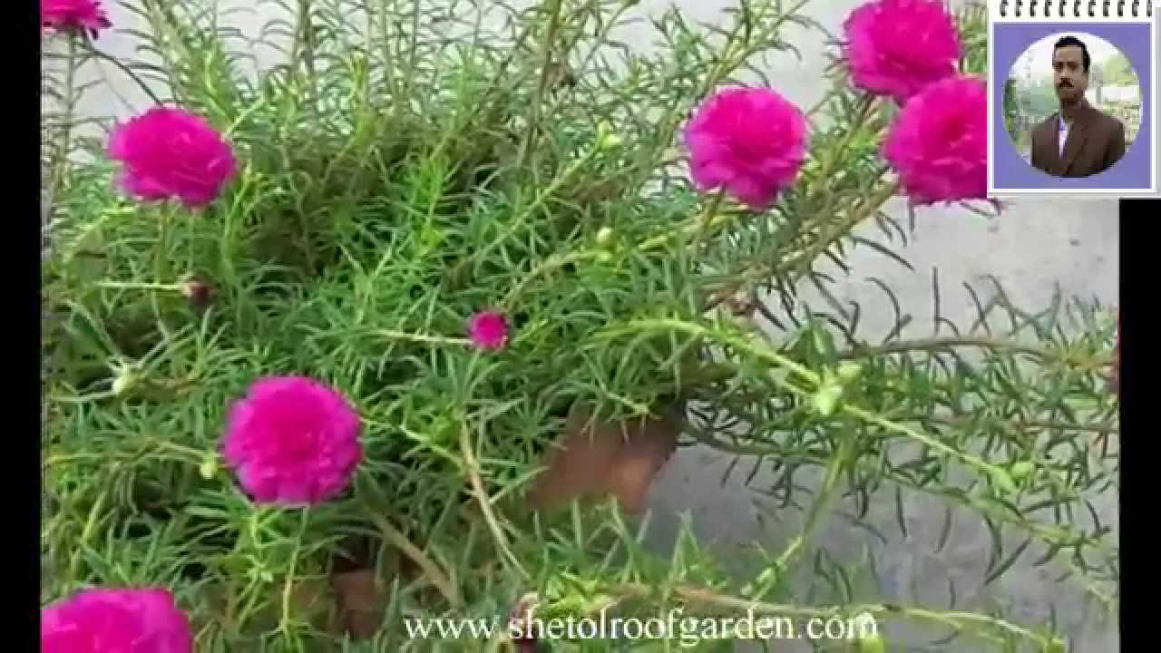 shetol roof garden video time flower youtube. Black Bedroom Furniture Sets. Home Design Ideas