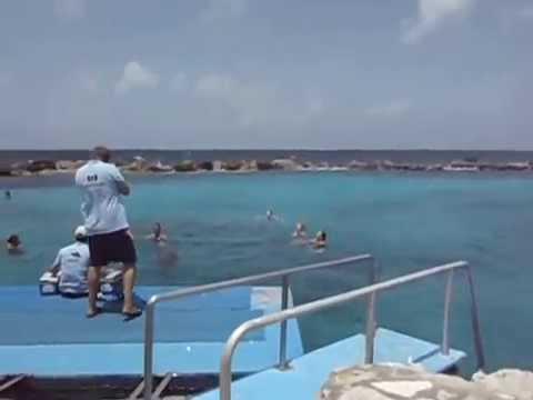 Nado com Golfinhos - Curaçao - 21 de maio de 2014