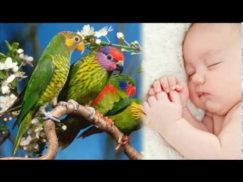 пение птиц   Удивительный сон трюк  успокаивающий белый шум