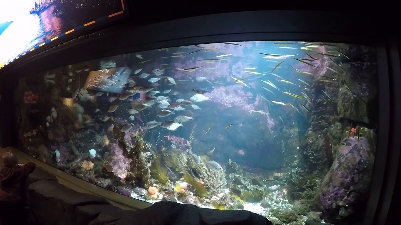 Freshwater aquarium fish vancouver - Vancouver Aquarium Walk Tour