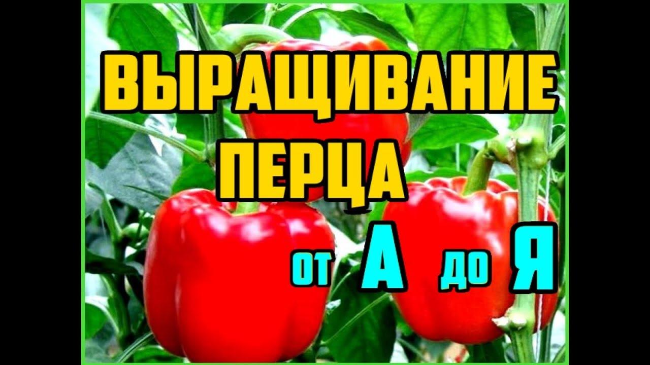 Выращивание перца от А до Я / Рассада перца / Выращивание перца в открытом грунте